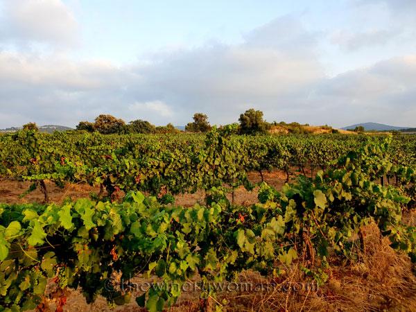 Vineyard18_7.15.18_TWW