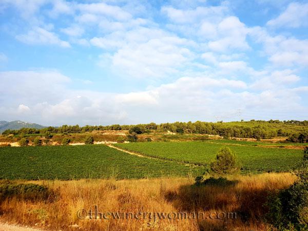 Vineyard18_7.29.18_TWW