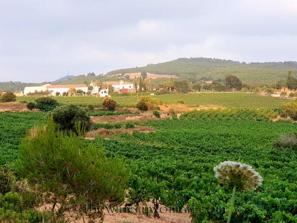 Vineyard20_7.15.18_TWW