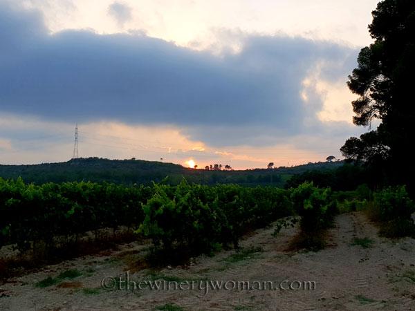 Vineyard21_7.15.18_TWW