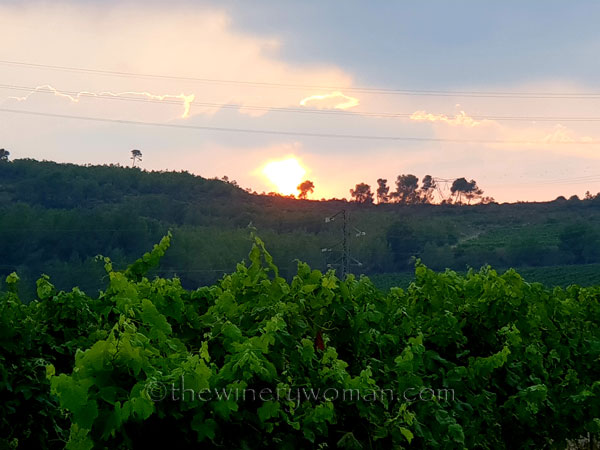 Vineyard22_7.15.18_TWW