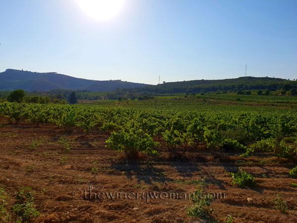 Vineyard2_7.19.18_TWW