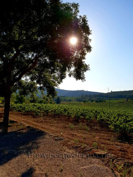 Vineyard3_7.19.18_TWW