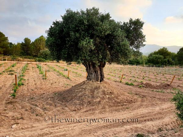 Vineyard5_7.15.18_TWW
