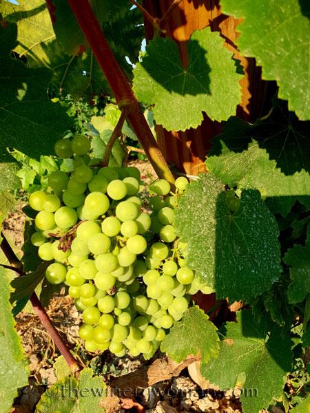 Vineyard5_7.21.18_TWW
