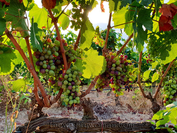 Vineyard5_7.29.18_TWW