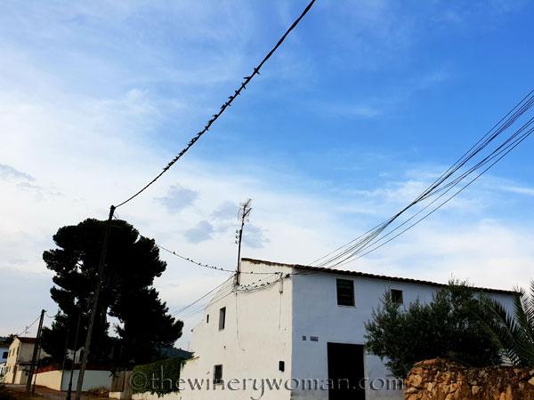 Birds_on_a_wire_8.10.18_TWW