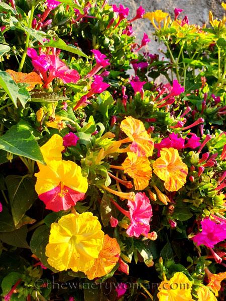 Flowers2_8.22.18_TWW