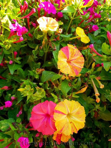 Flowers3_8.22.18_TWW