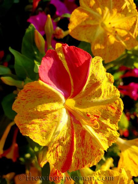 Flowers5_8.22.18_TWW