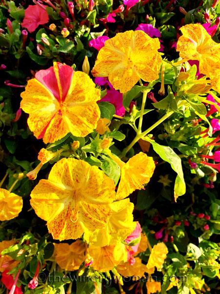 Flowers6_8.22.18_TWW