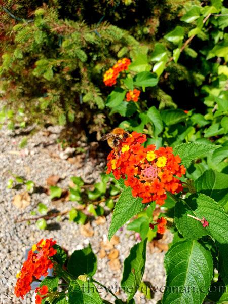 Garden3_8.18.18_TWW