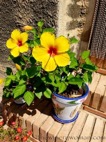 Garden_8.18.18_TWW