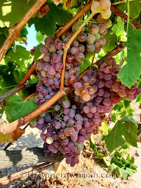 Grapes13_8.24.18_TWW