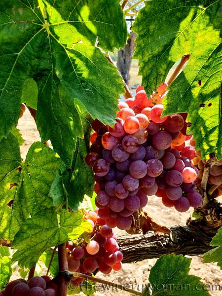 Grapes15_8.24.18_TWW