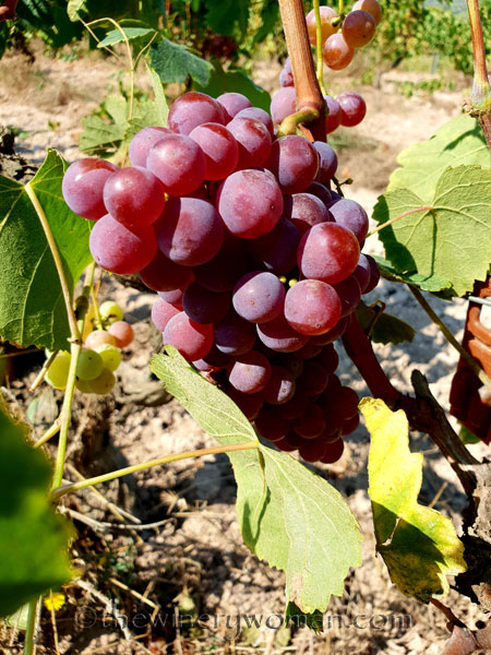Grapes21_8.24.18_TWW