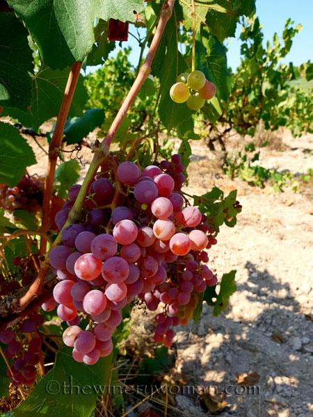Grapes22_8.24.18_TWW