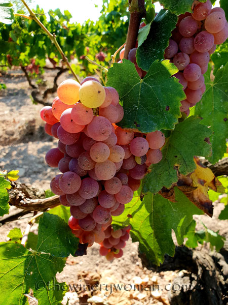 Grapes25_8.24.18_TWW
