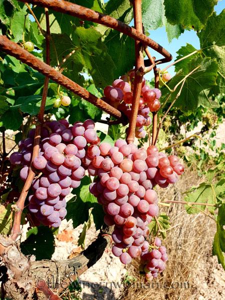 Grapes27_8.24.18_TWW