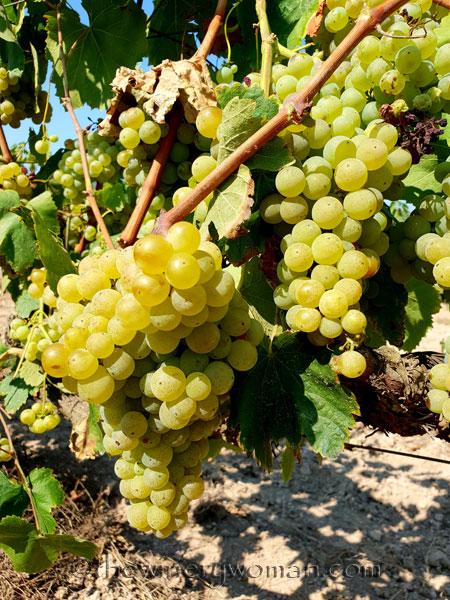 Grapes28_8.24.18_TWW