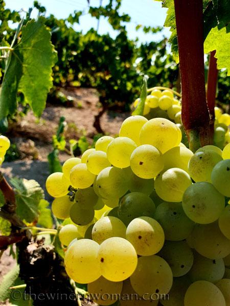 Grapes30_8.24.18_TWW