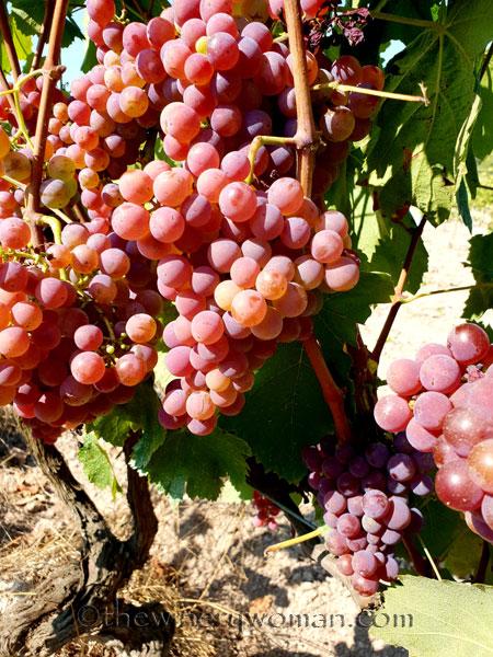 Grapes32_8.24.18_TWW