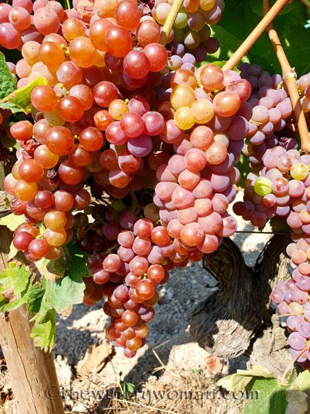 Grapes36_8.24.18_TWW