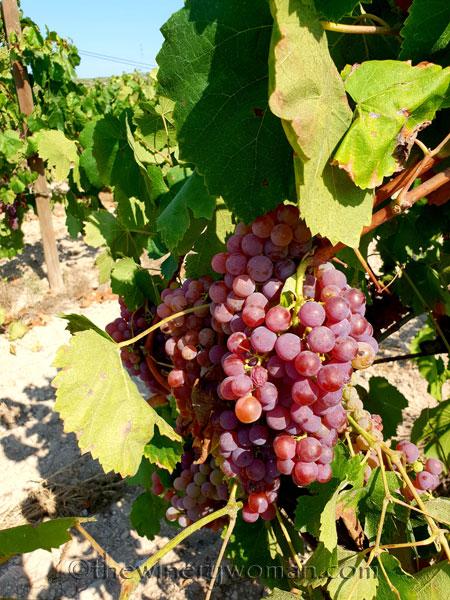 Grapes3_8.24.18_TWW