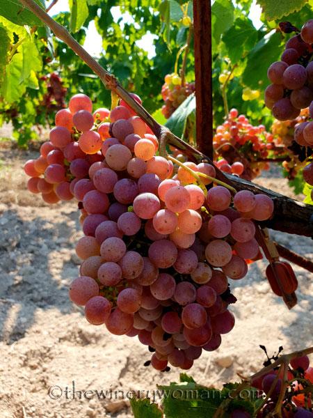 Grapes7_8.24.18_TWW