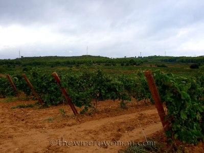 Vineyard10_8.31.18_TWW