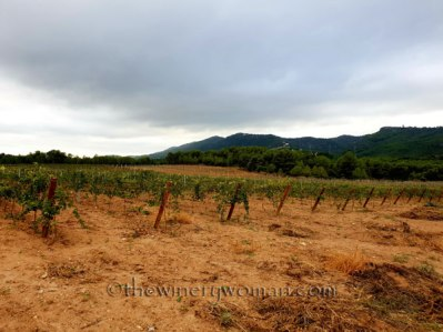 Vineyard11_8.31.18_TWW