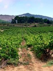 Vineyard12_8.31.18_TWW