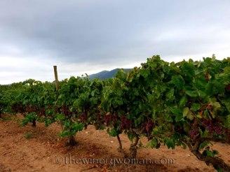Vineyard13_8.31.18_TWW
