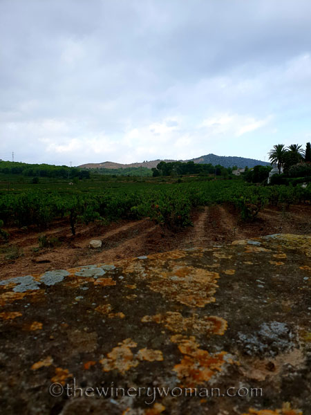 Vineyard18_8.31.18_TWW