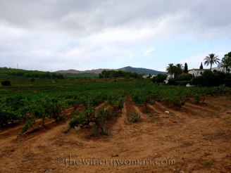 Vineyard2_8.31.18_TWW