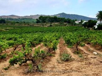 Vineyard3_8.31.18_TWW