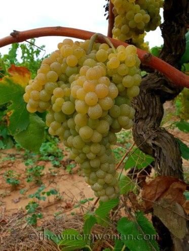Vineyard4_8.31.18_TWW