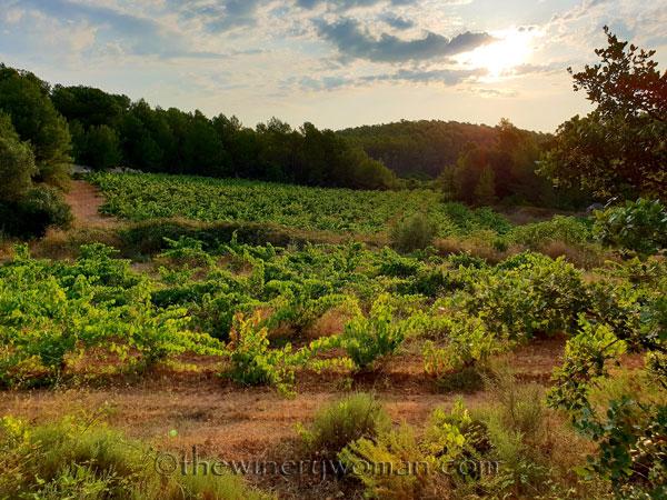 Vineyard4_8.5.18_TWW