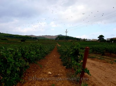 Vineyard9_8.31.18_TWW