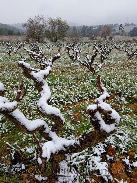 Vineyard_snow7_2.28.18_TWW