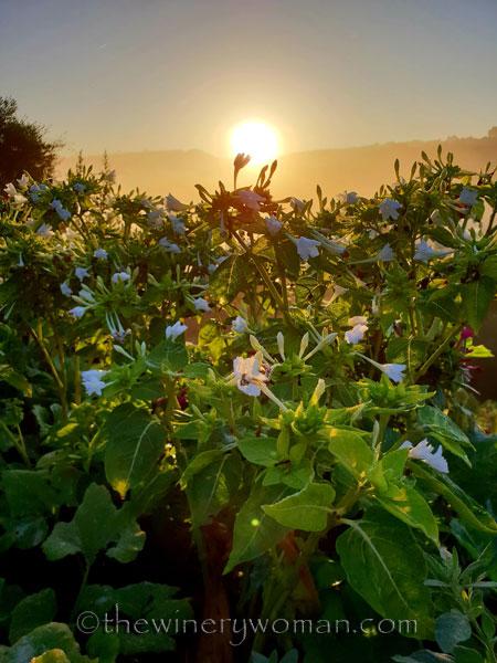 Sunrise_Viladellops10_9.14.18_TWW