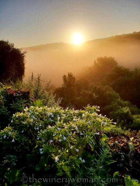 Sunrise_Viladellops11_9.14.18_TWW