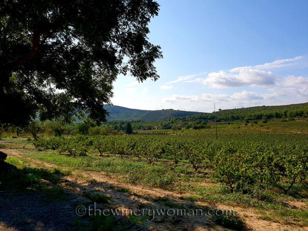 Vineyard2_9.16.18_TWW