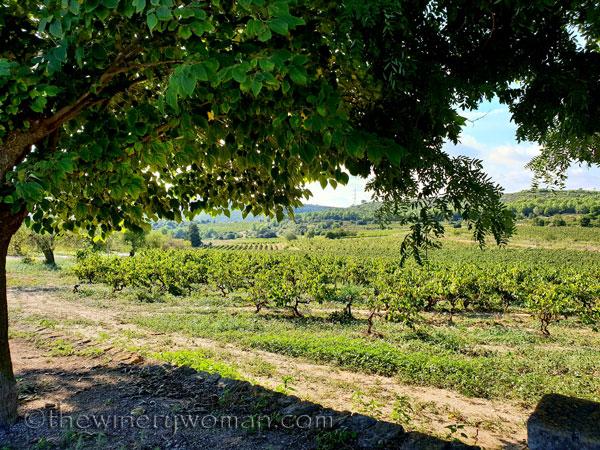 Vineyard6_9.16.18_TWW