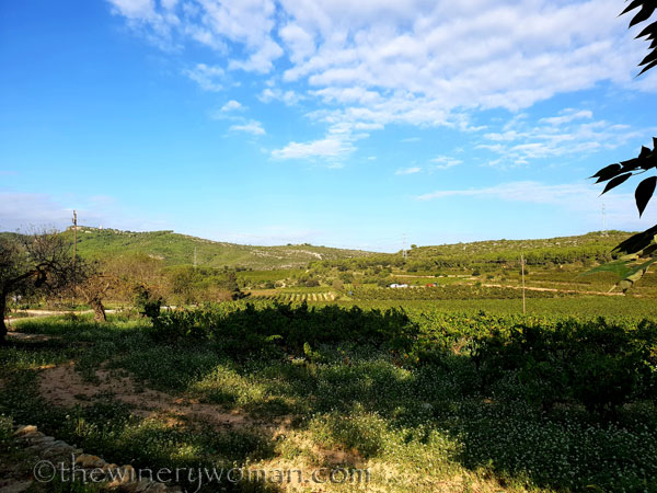 Vineyard_views5_9.25.18_TWW