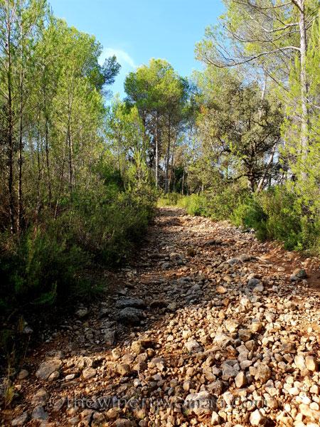 Walk-in-the-woods10_9.8.18_TWW