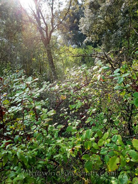 Walk-in-the-woods14_9.8.18_TWW