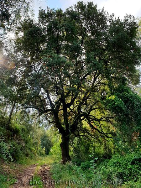 Walk-in-the-woods15_9.8.18_TWW