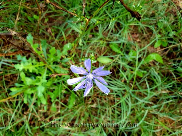 Walk-in-the-woods16_9.8.18_TWW