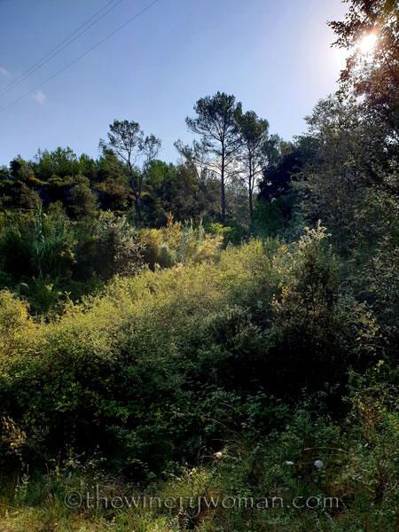 Walk-in-the-woods2_9.8.18_TWW